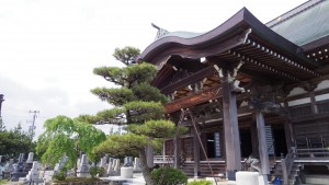 お寺と松の剪定